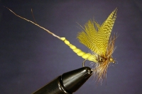 EXTENDED BODY MAYFLY