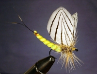 BIG MAYFLY